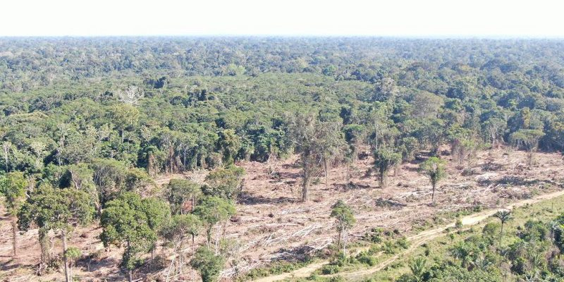 operacao-desmatamento-regiao-noroeste